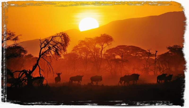 Kenya Tented Luxury Safari